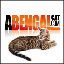 patrocinadores de gatos