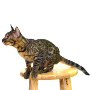 fotografiar tu gato 2