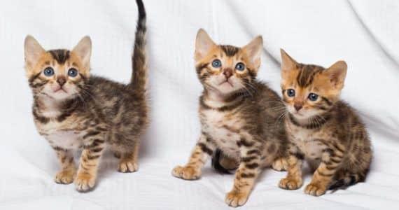 Prevención de enfermedades en felinos