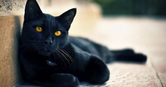 gato_negro_acostado
