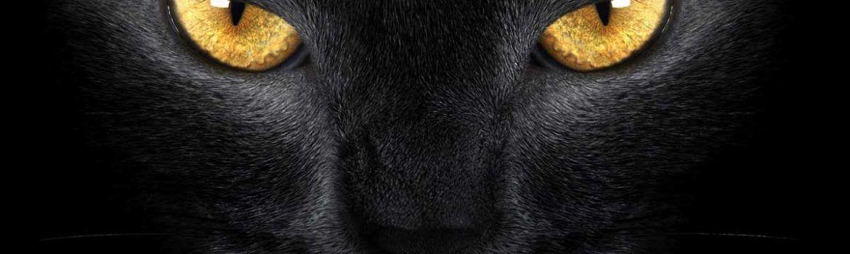 ojos-gato-negro
