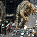 ¿Cuanto mide un gato bengalí?