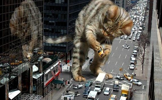 cuanto mide un gato bengal