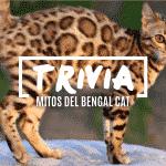 TRIVIA Mitos Urbanos de los gatos de bengala.
