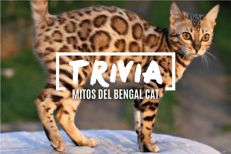 trivia-los-gatos-bengala-3