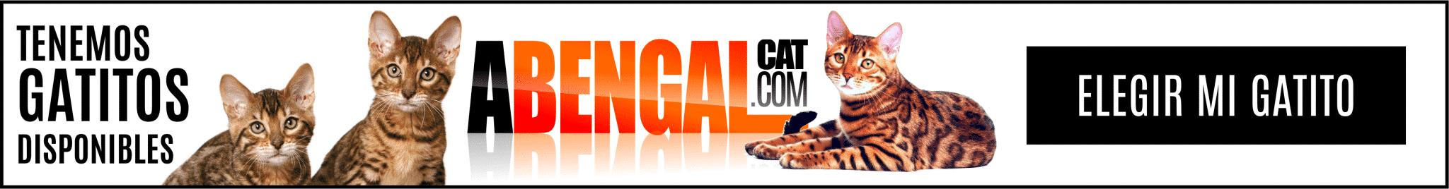 banners-elegir-gatitobengal