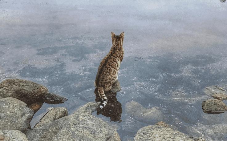 Como entrenar a un gato para que haga trucos 2