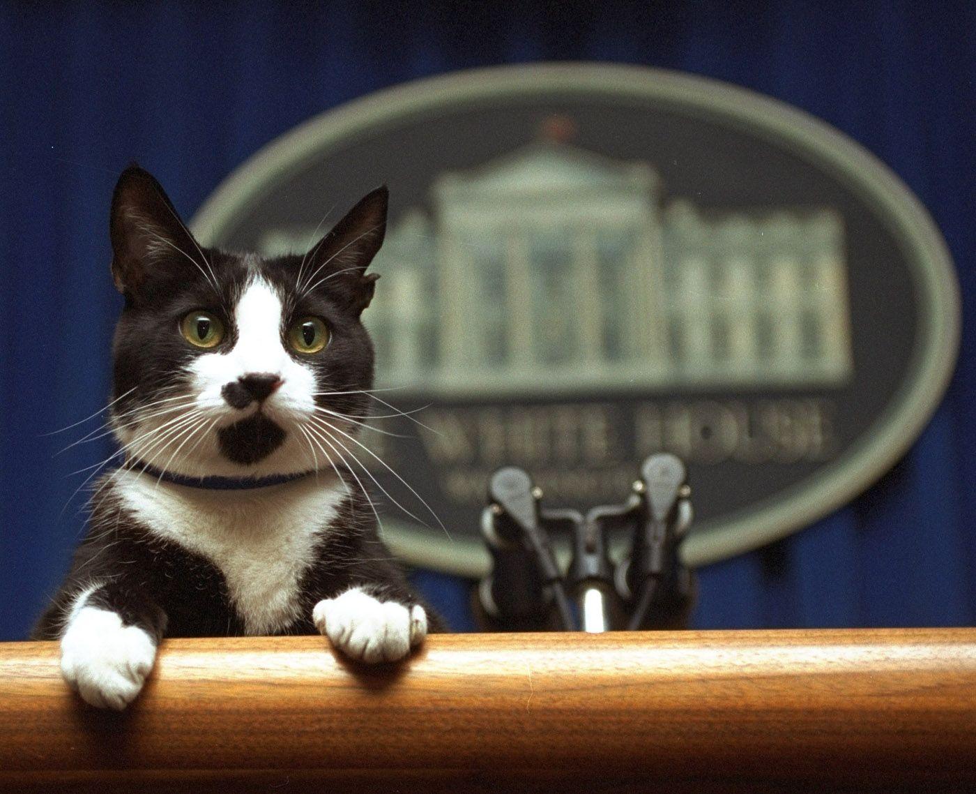 Dia internacionald el gatoa