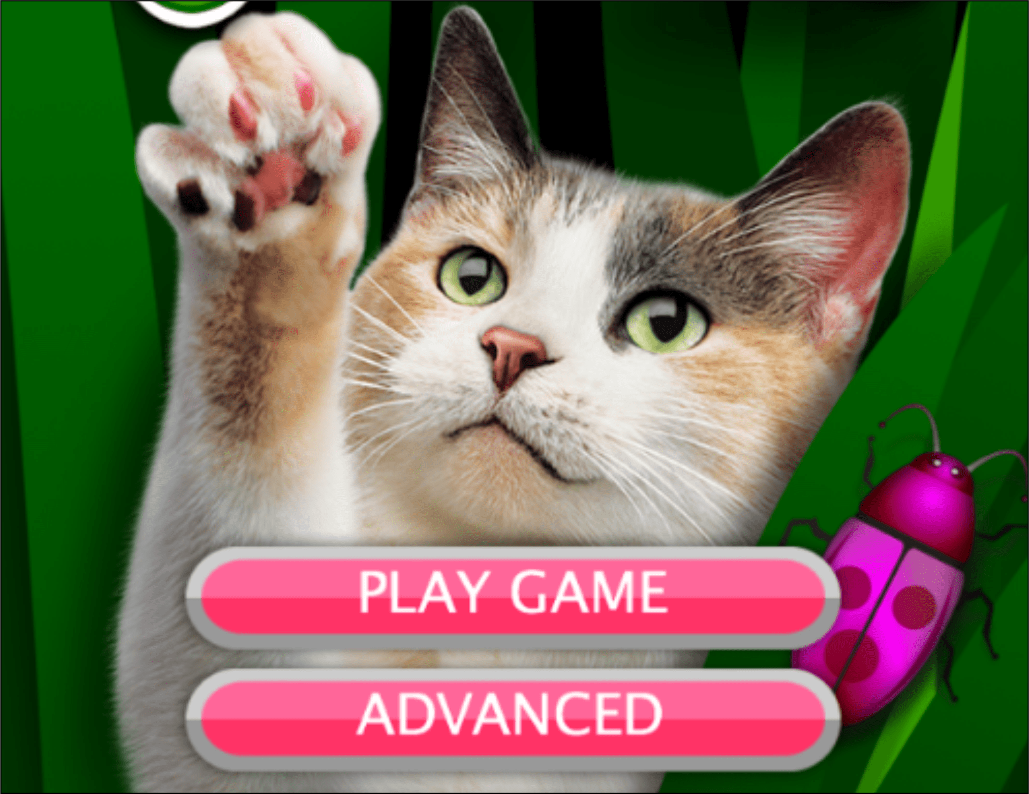 juegos para gatos-2