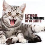 Maullido de gato