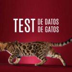 Datos curiosos de gatos de todas las razas