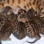 Gatitos tiernos y sus cuidados