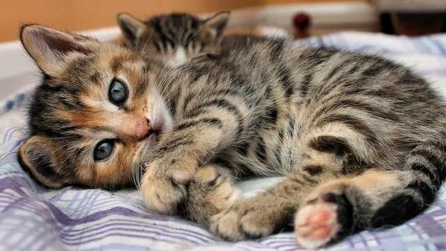 gatitos 4