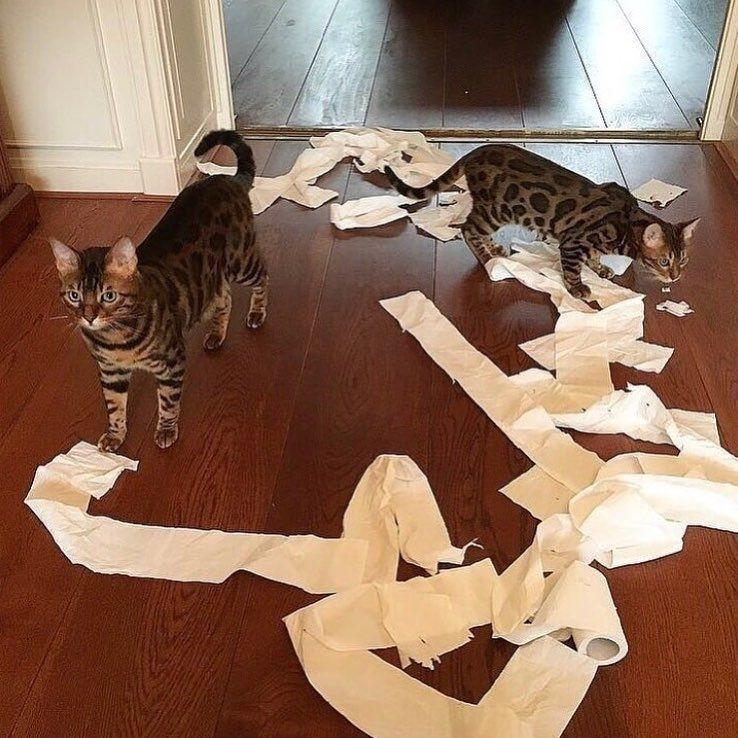 mitos sobre los gatos 2
