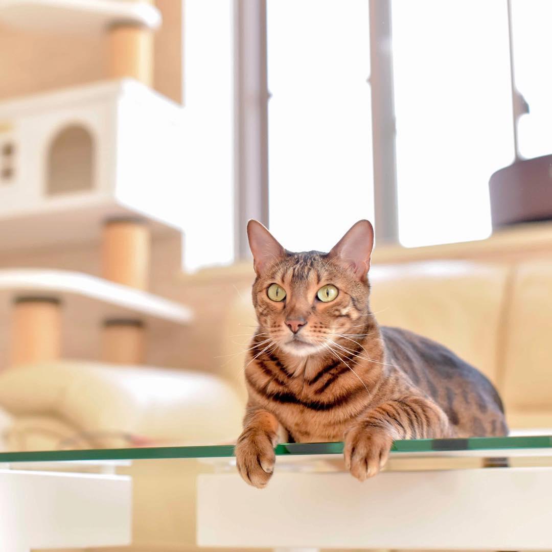mitos sobre los gatos 3