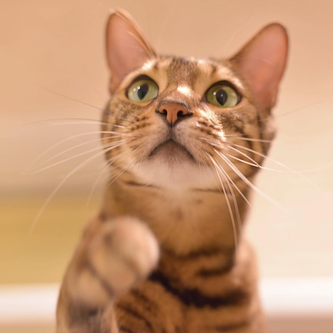 mitos sobre los gatos 4