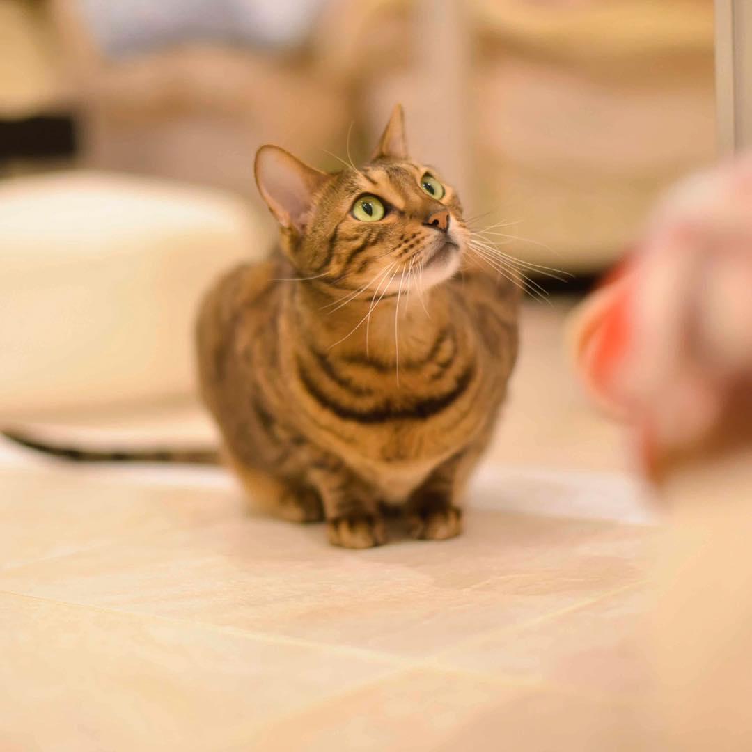 mitos sobre los gatos 5