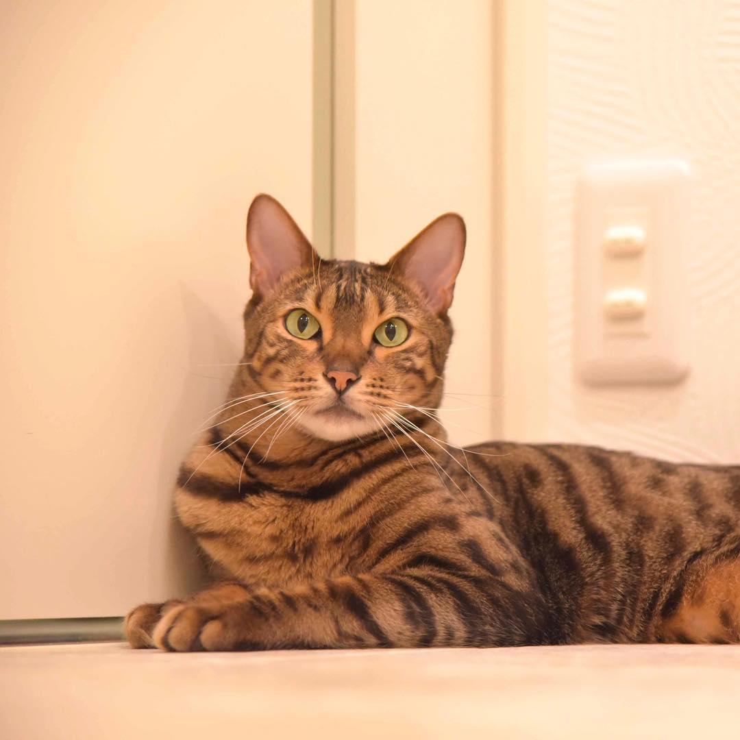 mitos sobre los gatos 12