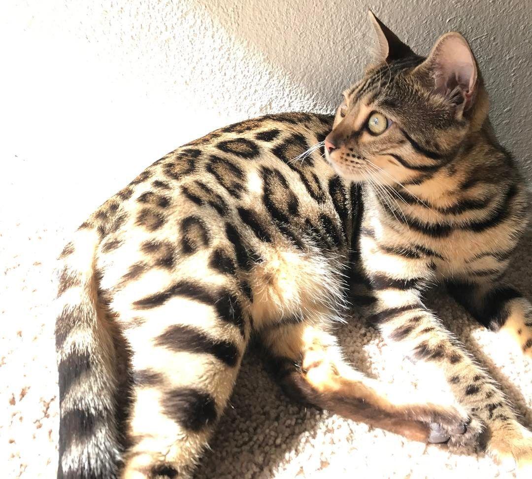 mitos sobre los gatos 10