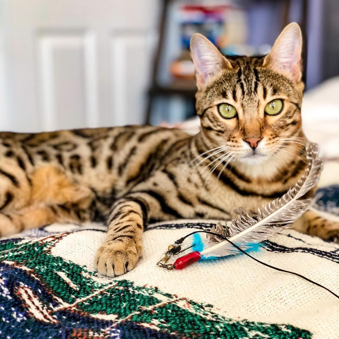 mitos sobre los gatos 9