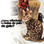 ¿Cómo eliminar bolas de pelo de gato?