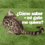 ¿Como saber si mi gato me quiere?
