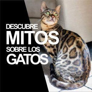 mitos de gatos