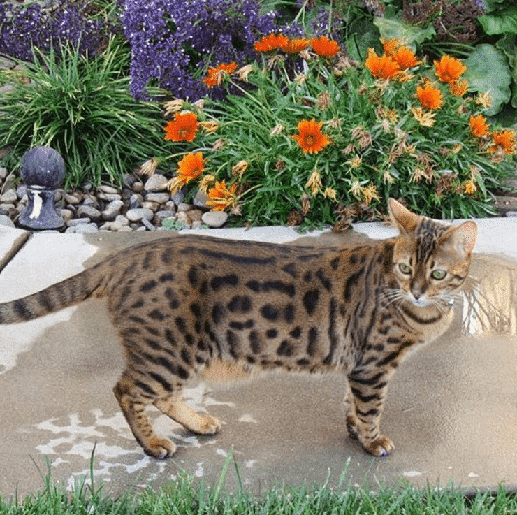 plantas seguras para gatos 3
