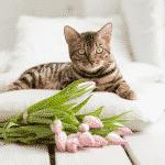 Plantas seguras para gatos domésticos
