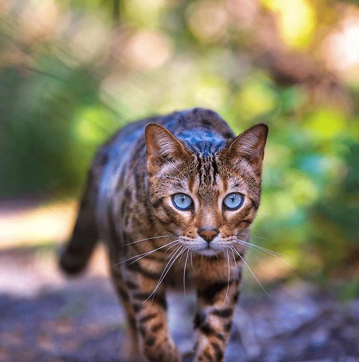 Plantas seguras para gatos dom sticos y no t xicas for Plantas toxicas gatos