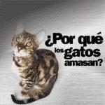 Por qué los gatos amasan como masajistas profesionales