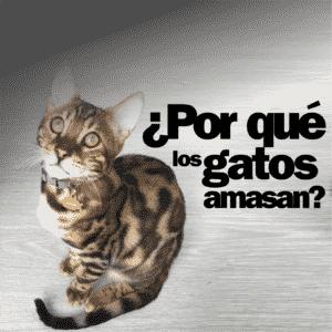 por-que-los-gatos-amasan-2