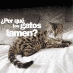 ¿Por qué los gatos lamen?
