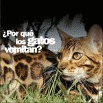 ¿Por qué mi gato vomita? No tengo la menor idea