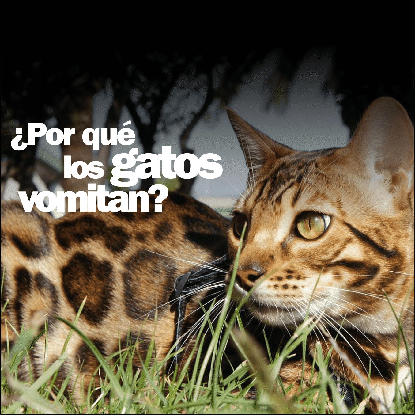 por-que-los-gatos-vomita-2