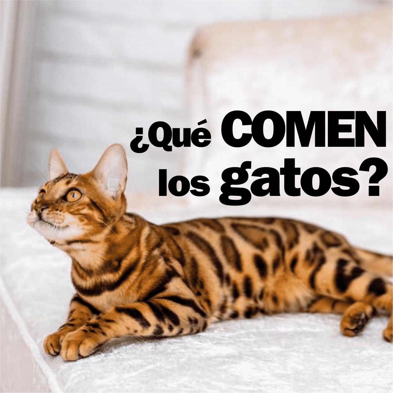 que-comen-los-gatos-2