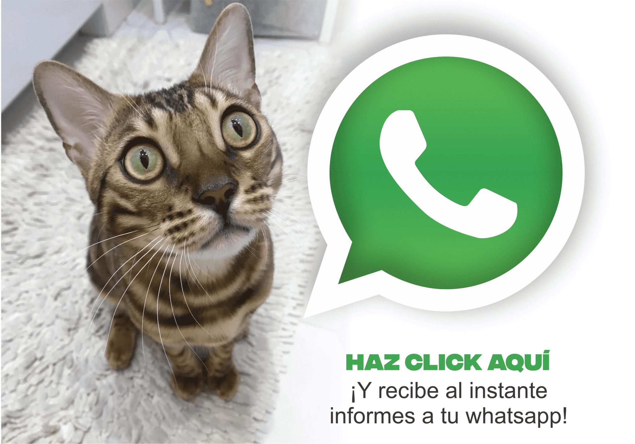 haz click y recibe informes por whatsapp