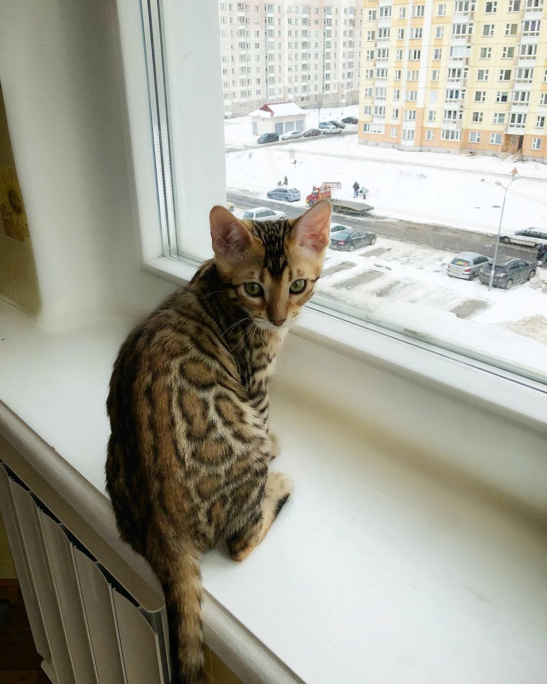 caracteristicas de los gatos-5