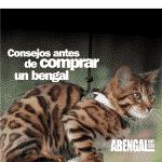 Consejos antes de comprar gatito bengalí