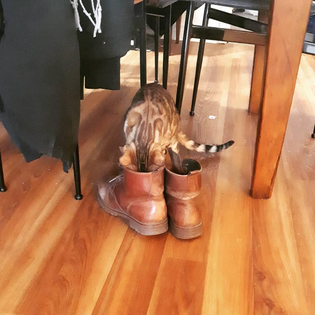 envenenamiento en gatos 5
