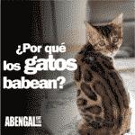 Por que los gatos babean
