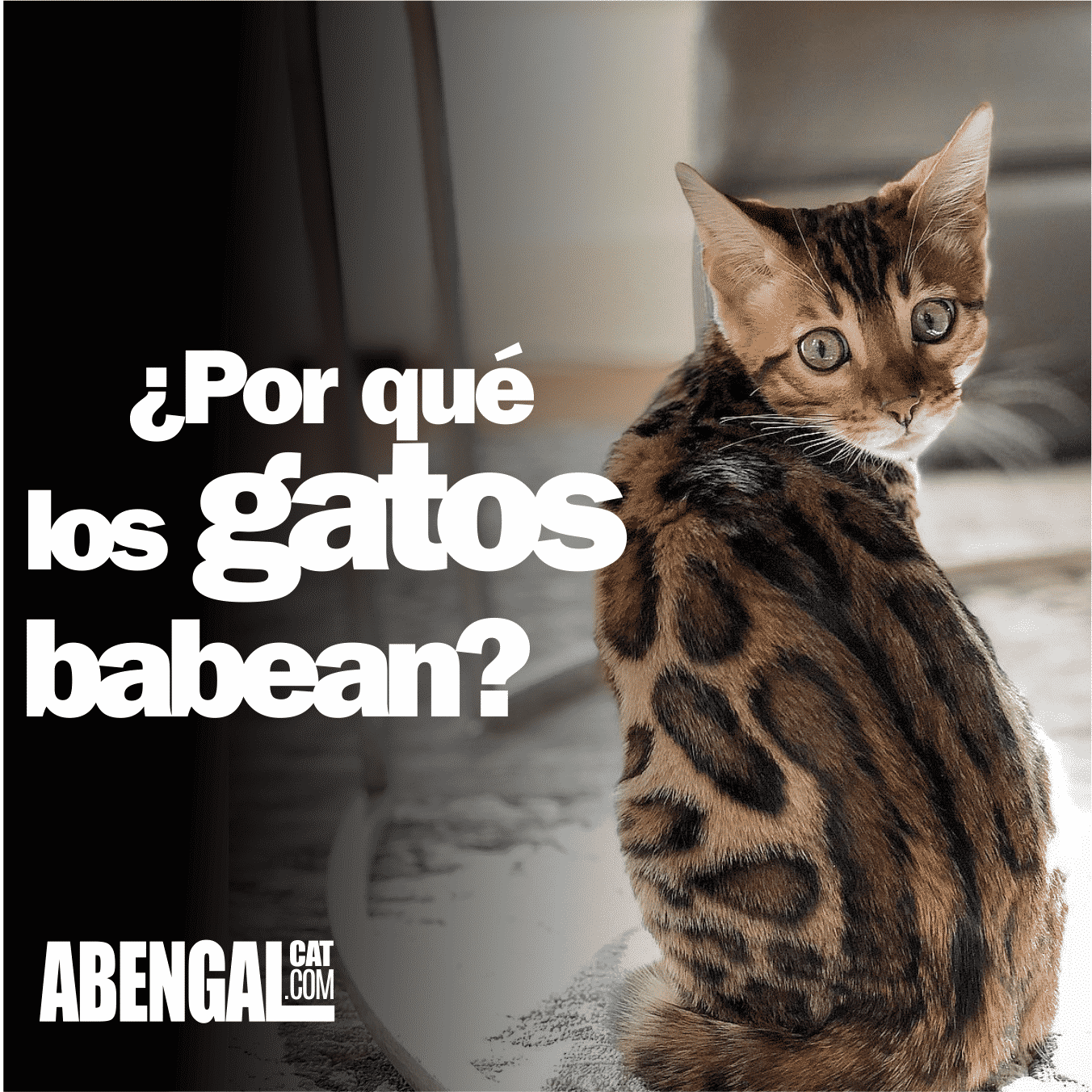 por-que-los-gatos-babean-2