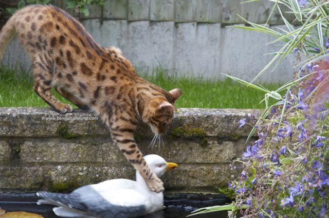 gatos y ratones a
