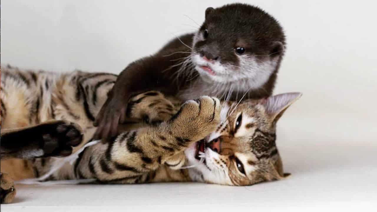 curiosidades de los gatos 6
