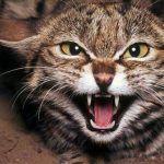 Tengo un gato agresivo y ahora que hago.