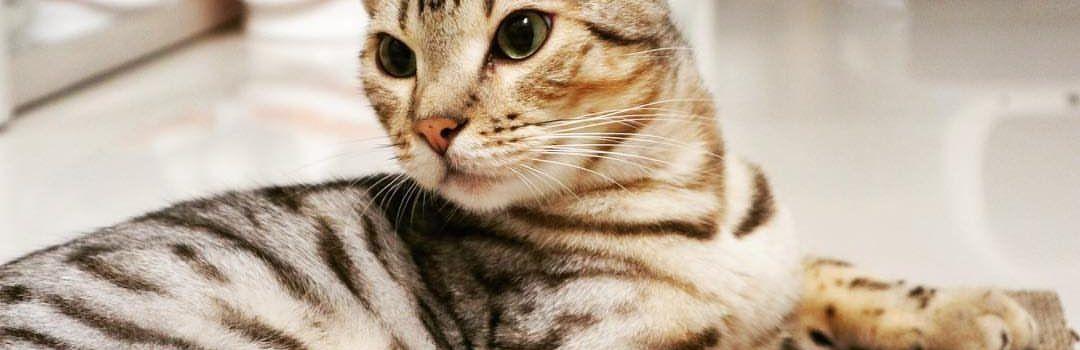 mejor alimento para gatos 3