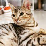 ¿Cuál es el mejor alimento para gatos?
