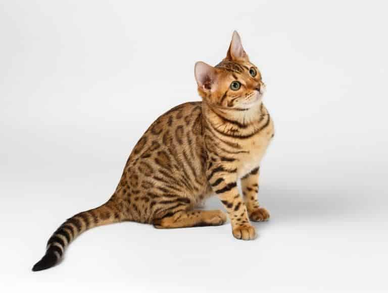 mejor alimento para gatos 4