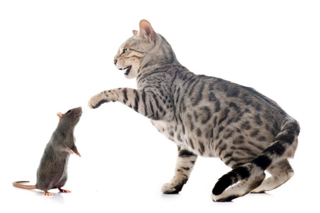 mejor alimento para gatos 6